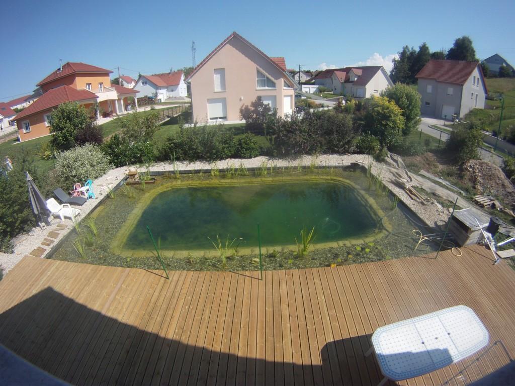 Les algues disparaissent piscine naturellepiscine naturelle for Algue dans piscine