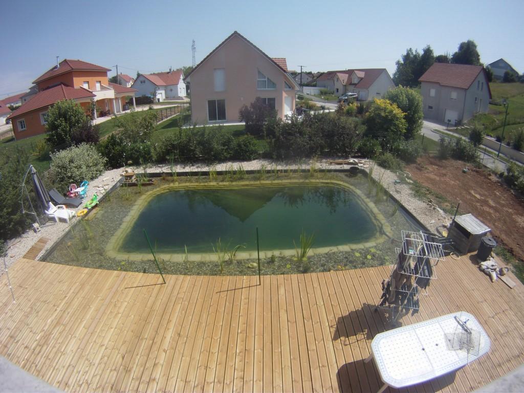Les algues disparaissent piscine naturellepiscine naturelle for Algues dans la piscine