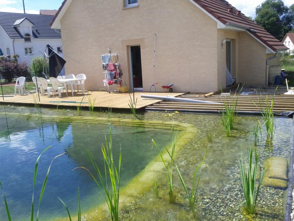 des algues filamenteuses piscine naturellepiscine naturelle. Black Bedroom Furniture Sets. Home Design Ideas