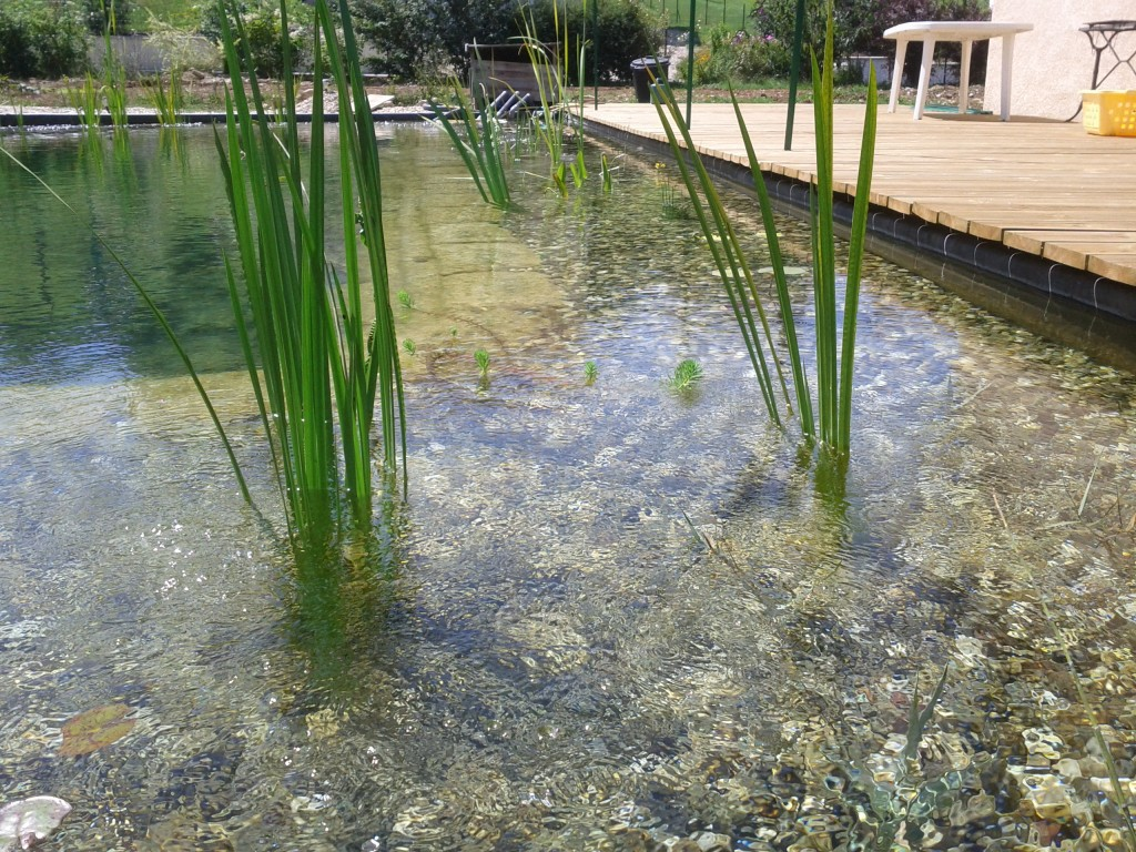 Que du bonheur piscine naturellepiscine naturelle for Construire sa piscine naturelle