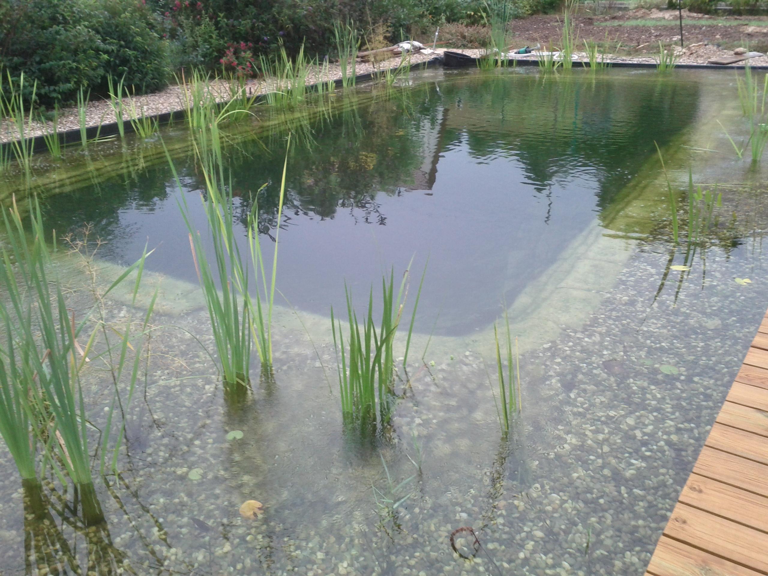 Piscines sur douglas for Reve d eau piscine