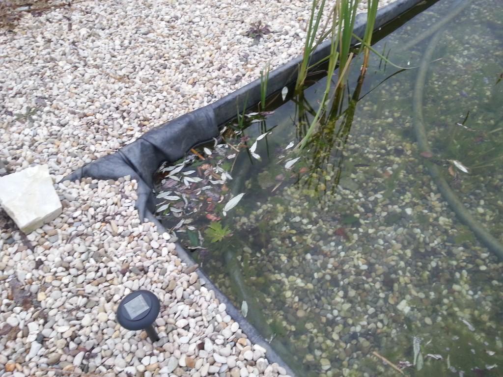 L 39 automne ses feuilles ses algues piscine for Algue dans piscine