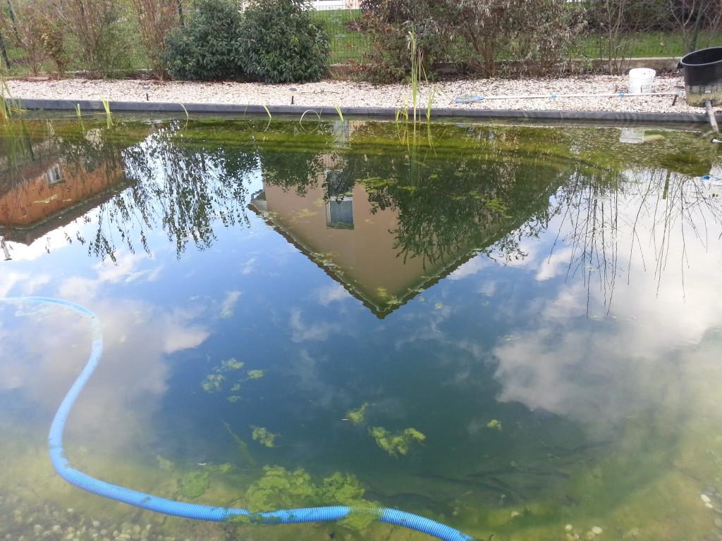 L 39 automne ses feuilles ses algues piscine for Algues de piscine