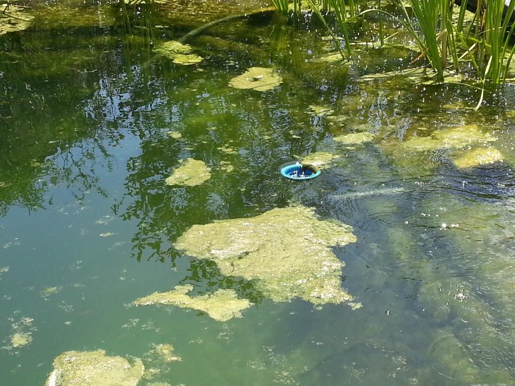D min ralisation et toujours des algues piscine for Algues de piscine