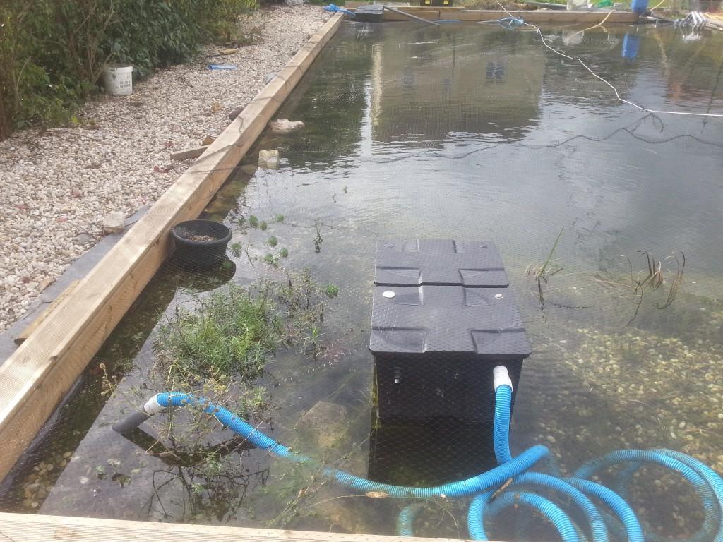 Filet piscine anti feuilles et taille des plantes for Filet de piscine