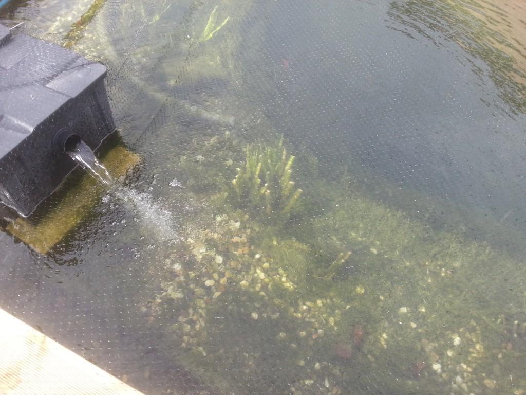 filet piscine anti feuilles et taille des plantes piscine naturellepiscine naturelle. Black Bedroom Furniture Sets. Home Design Ideas