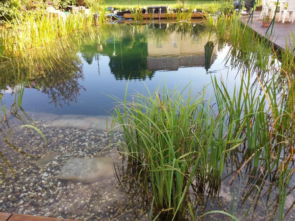 Floculant anti eau trouble pour piscine naturelle piscine naturellepiscine naturelle - Piscine eau trouble ...