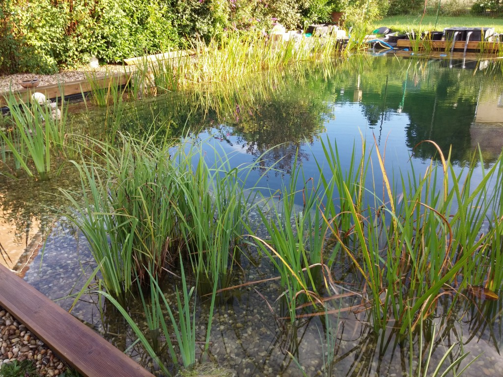 Floculant anti eau trouble pour piscine naturelle - Comment recuperer eau trouble piscine ...